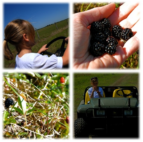 Berry_hunting